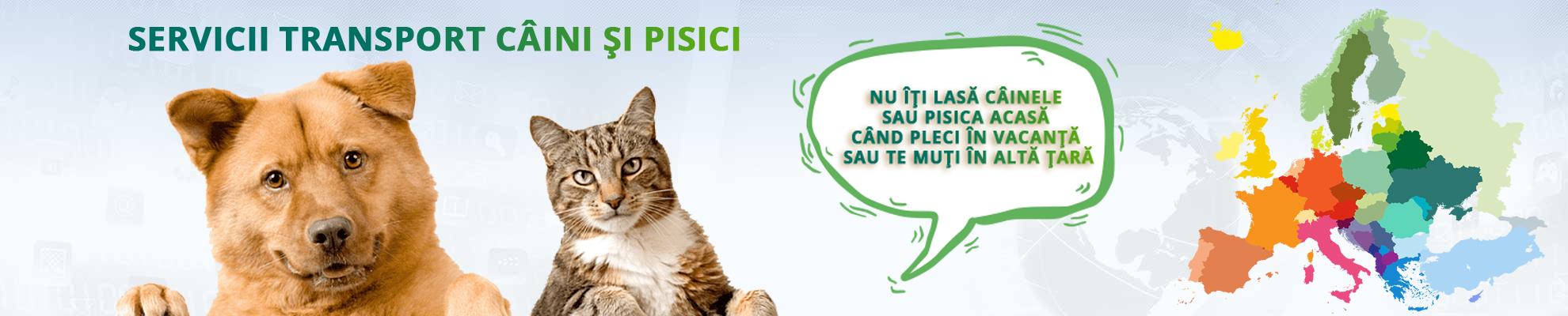 Servicii transport caini si pisici international