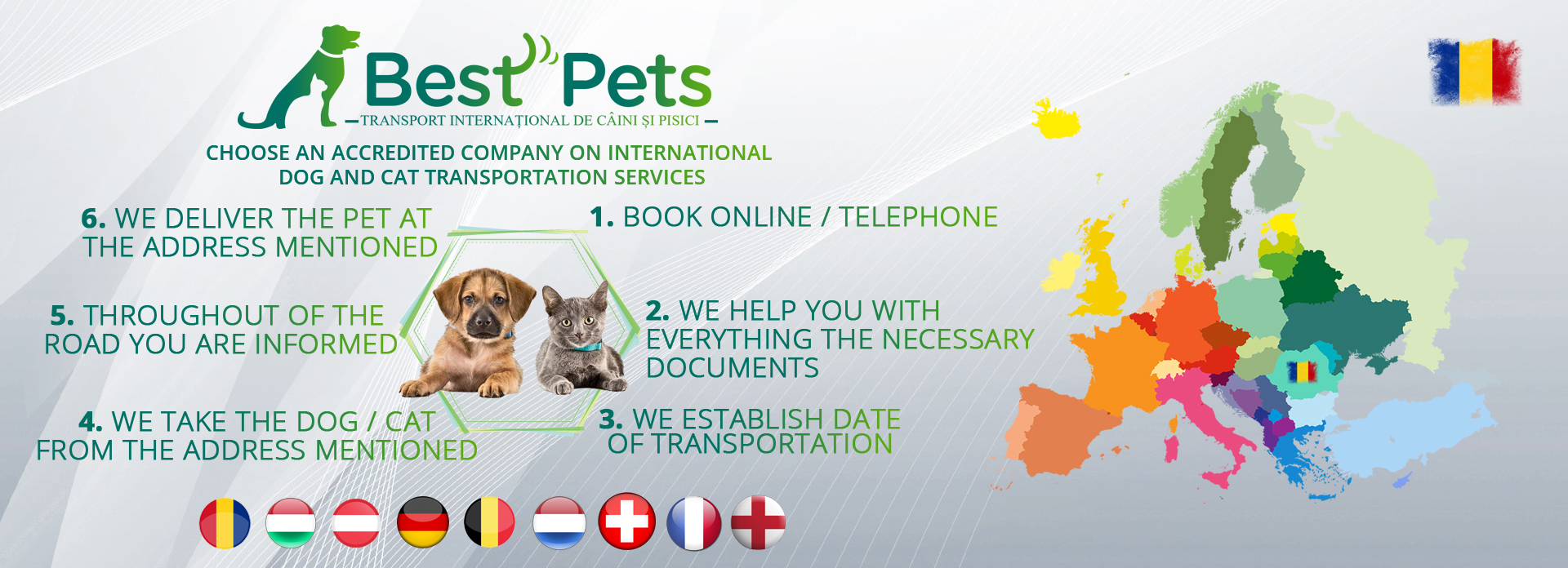 International pet transportation dogs and cats